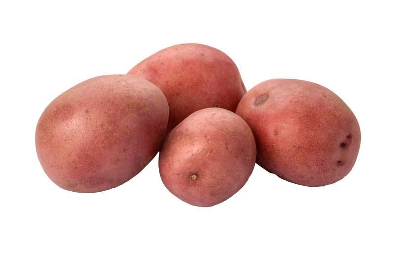 Aardappel – achtergrond