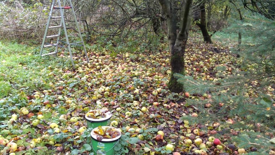 De laatste appels